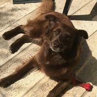 "record: 20,000 ש""ח למוצא: הכלב פרי אבד cover image"